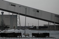 Industrial Cattle #2